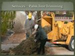 services palm tree trimming