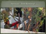 services tree removal