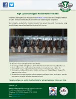 high quality pedigree polled hereford cattle