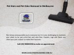 pet stain and pet odor removal in melbourne 1
