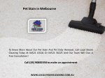 pet stain in melbourne 1