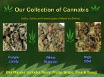 our collection of cannabis