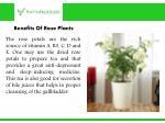 benefits of rose plants