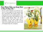 rose plants help you keep clam in day to day life