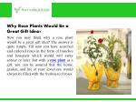 why rose plants would be a great gift idea