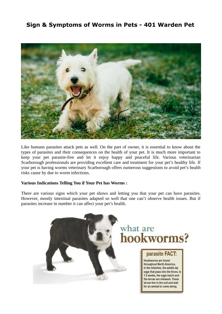 sign symptoms of worms in pets 401 warden pet n.