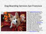 dog boarding services san francisco
