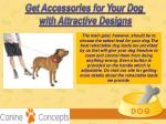 get accessories for your dog with attractive 1