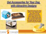 get accessories for your dog with attractive 2