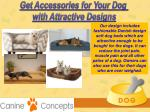 get accessories for your dog with attractive 4