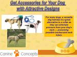 get accessories for your dog with attractive 5
