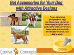 get accessories for your dog with attractive 6