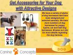 get accessories for your dog with attractive 7
