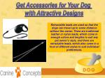 get accessories for your dog with attractive