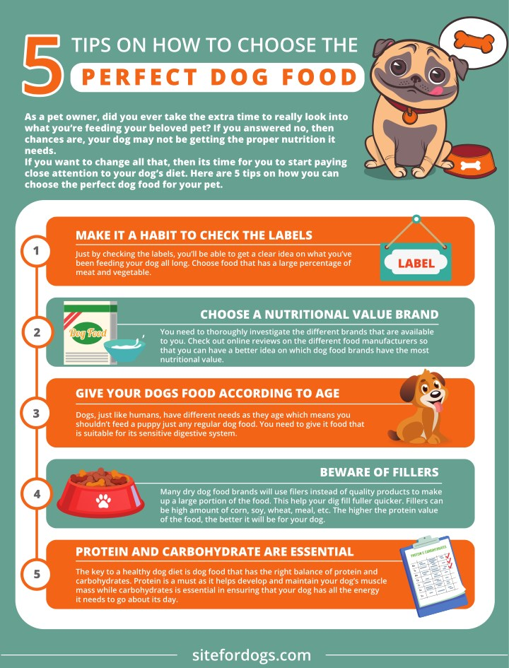 tips on how to choose the perfect dog food n.