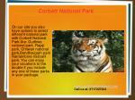 corbett national park 6