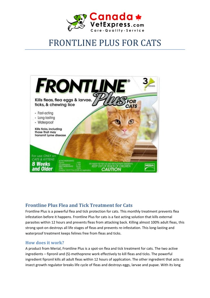 frontline plus for cats n.