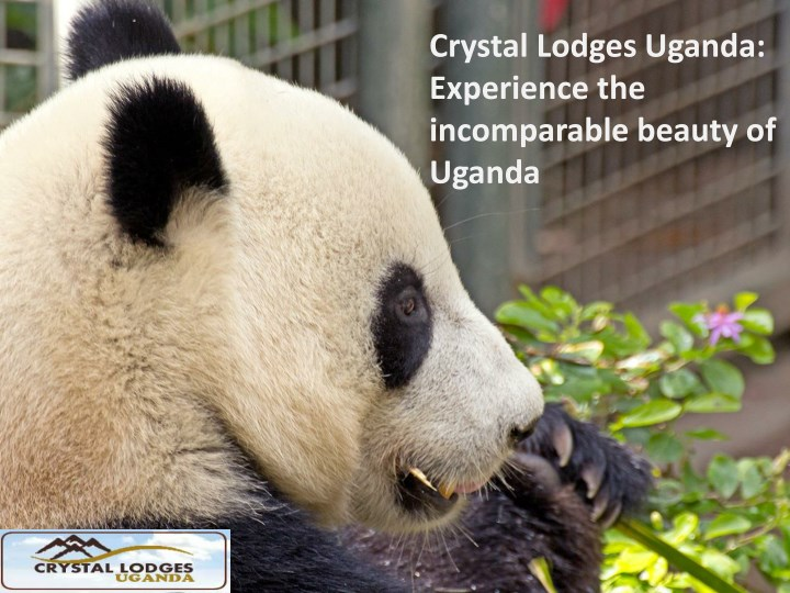 crystal lodges uganda experience the incomparable n.