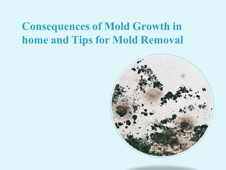 consequences of mold growth in home and tips for mold removal n.