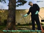 why you need pest control in your home