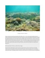 tempat diving di lombok