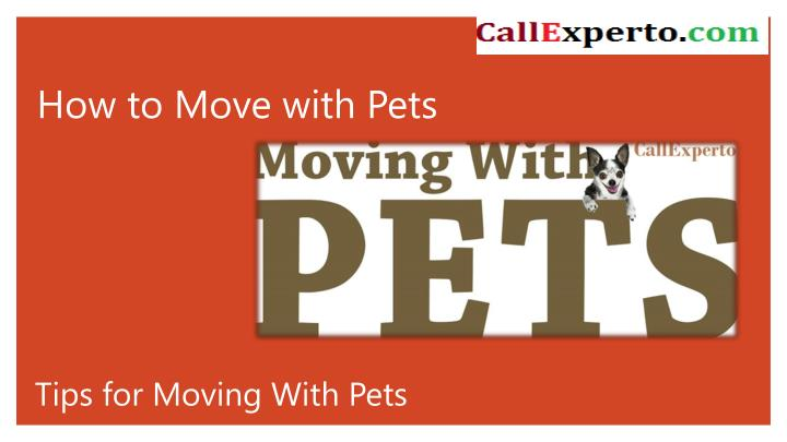 how to move with pets n.