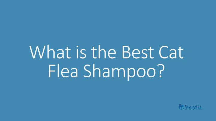 what is the best cat flea shampoo n.