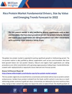 rice protein market fundamental drivers size