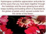 hydrangeas symbolize appreciation and pride