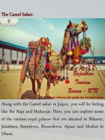 the thecamel camelsafari