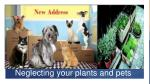 neglecting your plants and pets