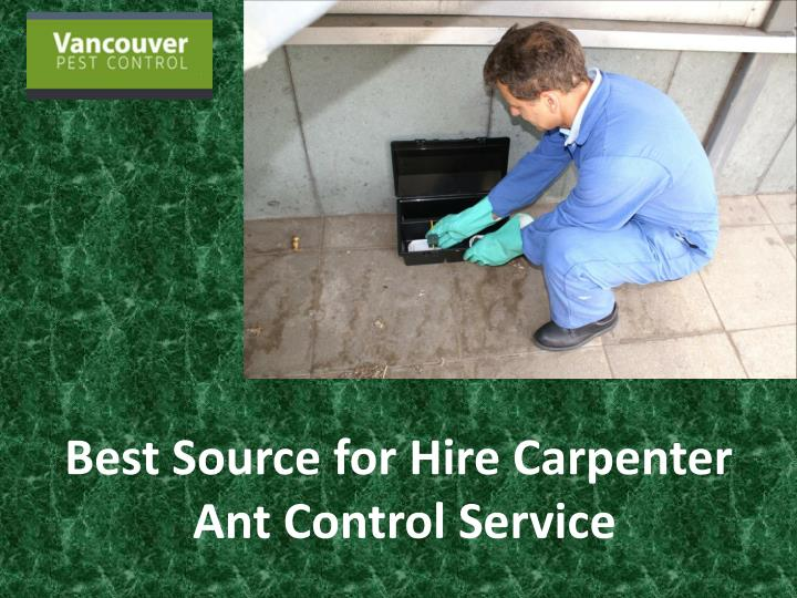 best source for hire carpenter ant control service n.