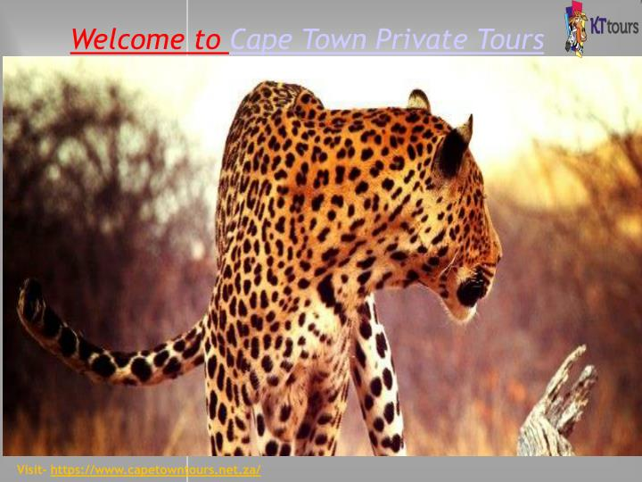 welcome to cape town private tours n.