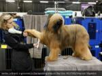 jambo a briard is groomed in the benching area
