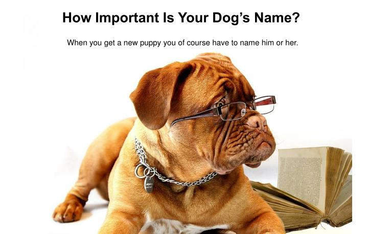 how important is your dog s name n.
