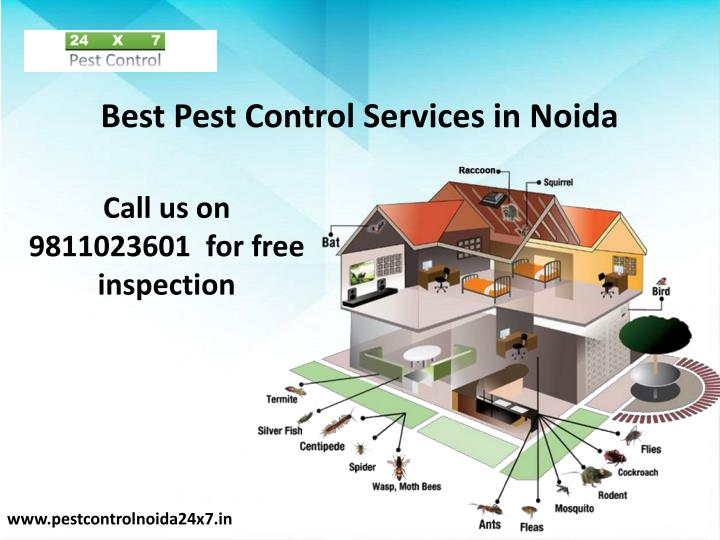 best pest control services in noida n.
