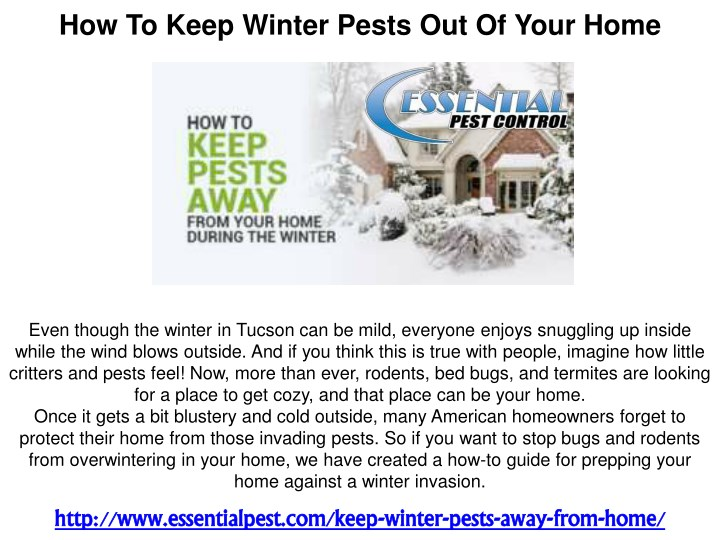 how to keep winter pests out of your home n.