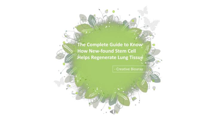 the complete guide to know how new found stem n.