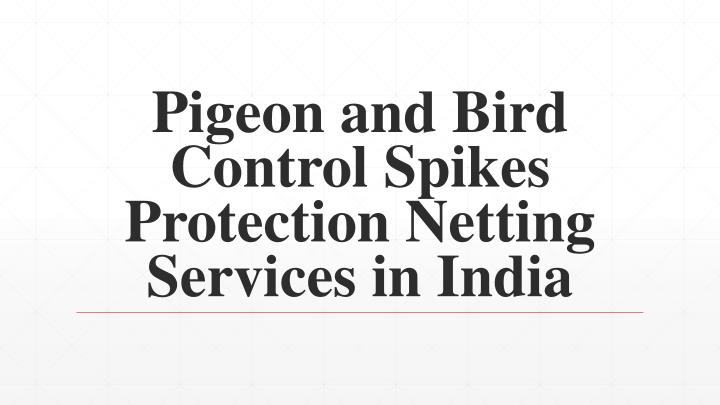 pigeon and bird control spikes protection netting services in india n.