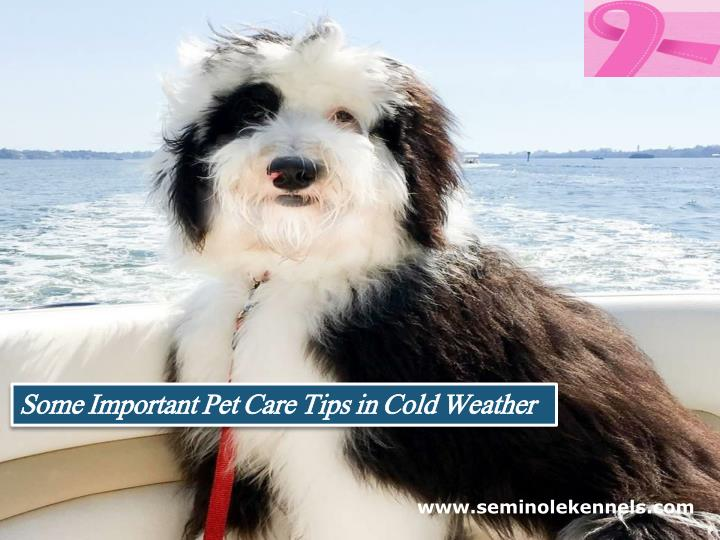 some important pet care tips in cold weather n.