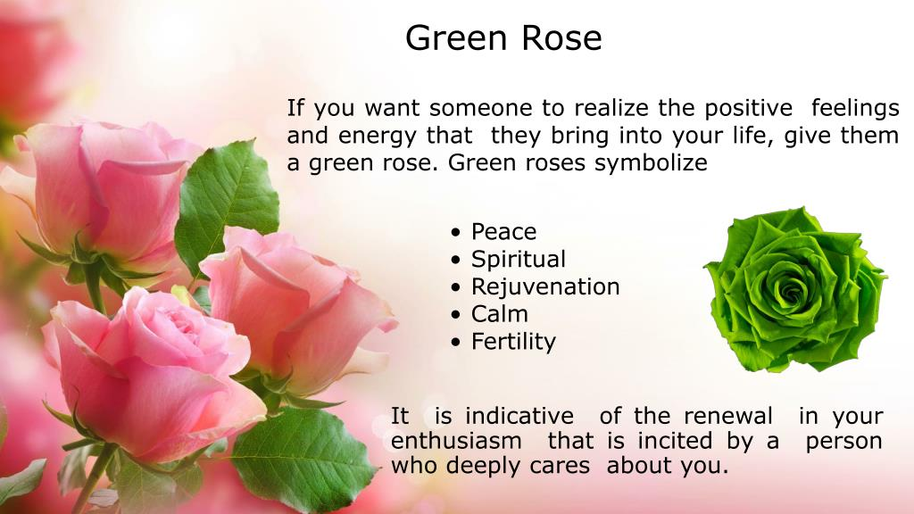 what does a green rose mean