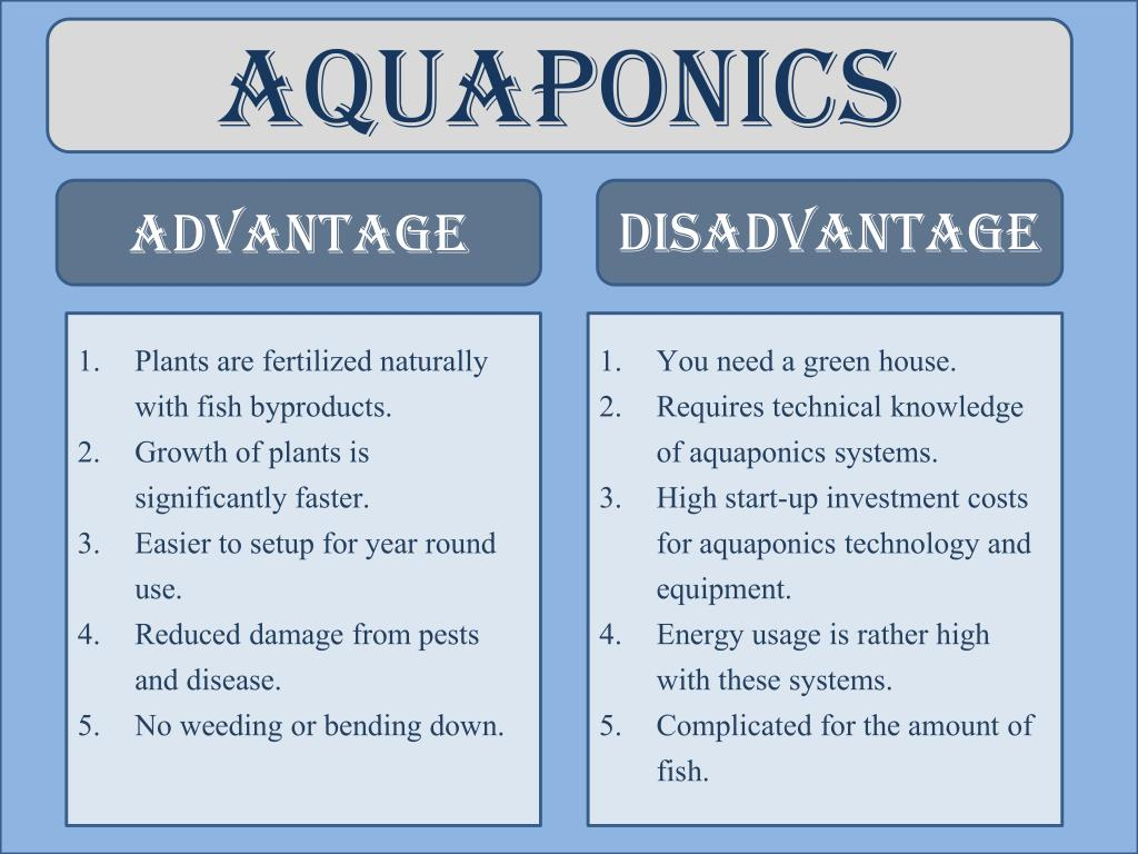 PPT - Difference Between Hydroponics and Aquaponics