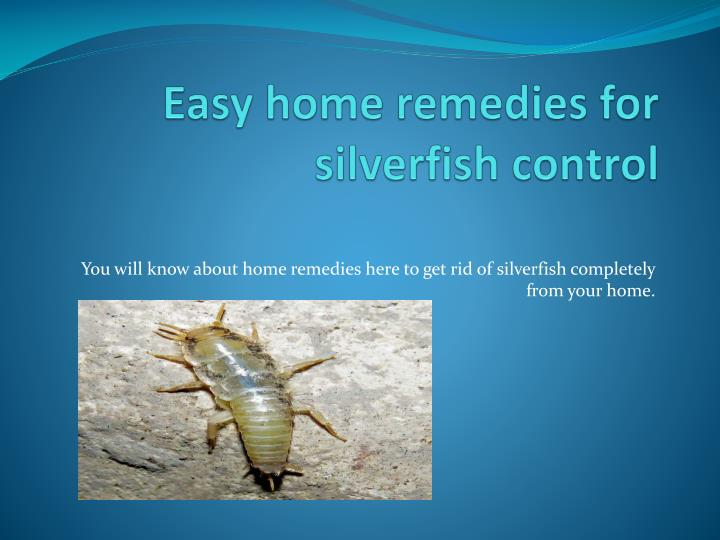 easy home remedies for silverfish control n.