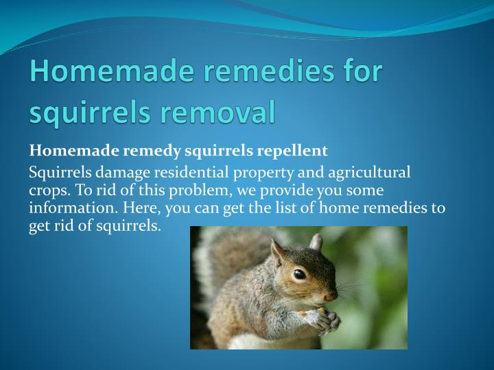 homemade remedies for squirrels removal n.