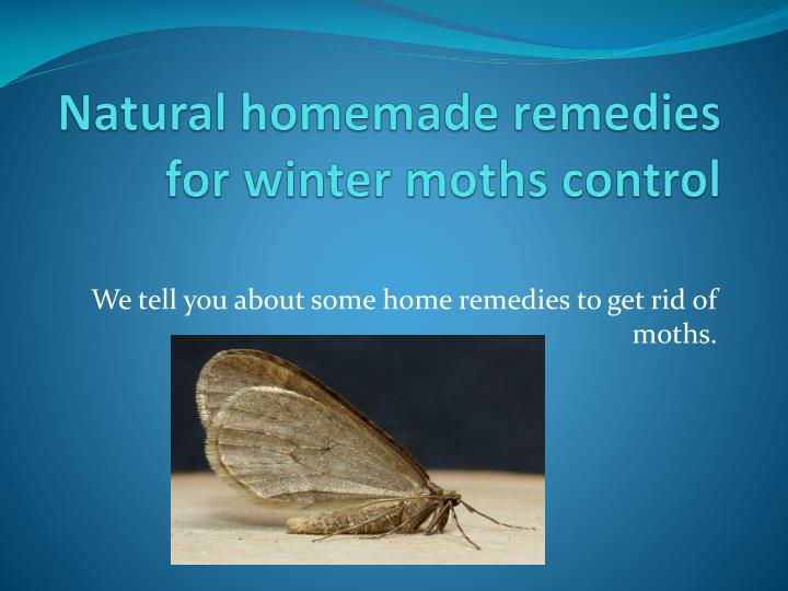 natural homemade remedies for winter moths control n.
