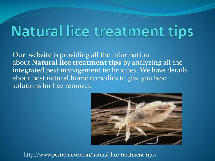 Natural lice treatment tips