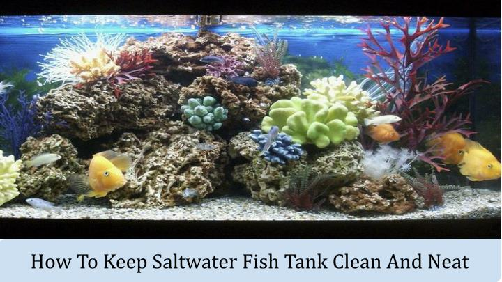 how to keep saltwater fish tank clean and neat n.