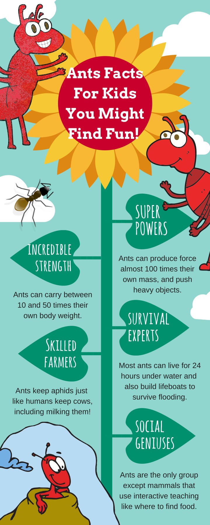 fun facts about ants for preschoolers ppt ant facts infographic for powerpoint 219
