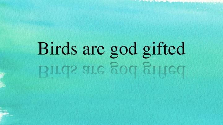 birds are god gifted n.