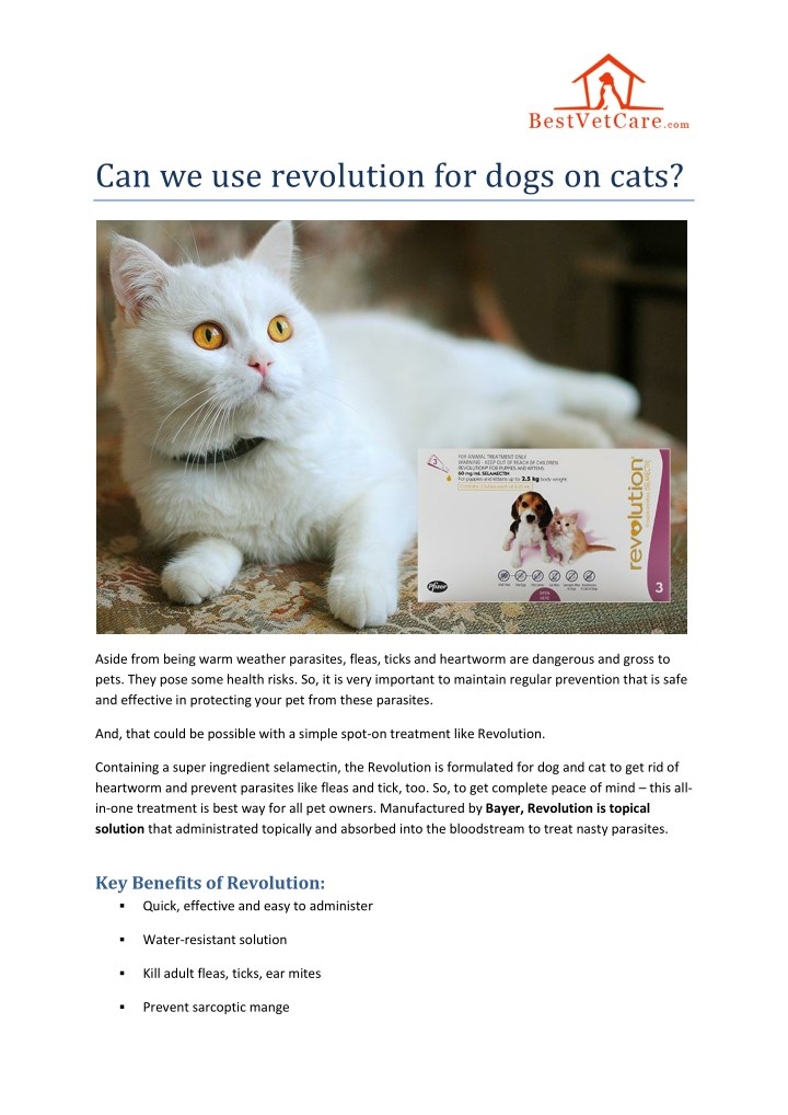 can we use revolution for dogs on cats n.